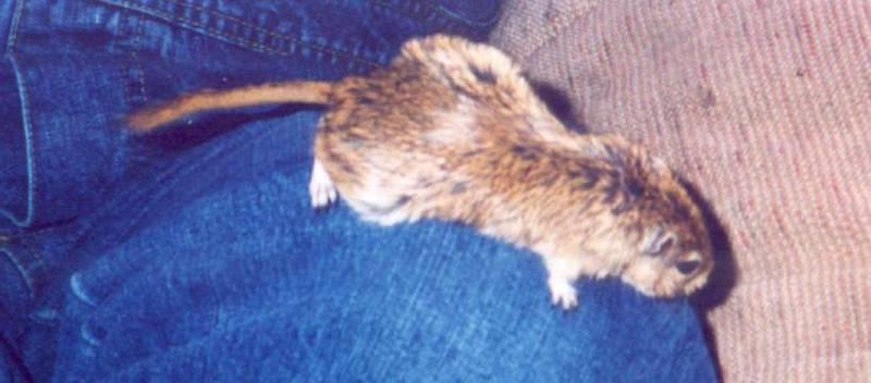 wlhj-thumper-jennifer-Hamster-by William L Harris Jr.jpg