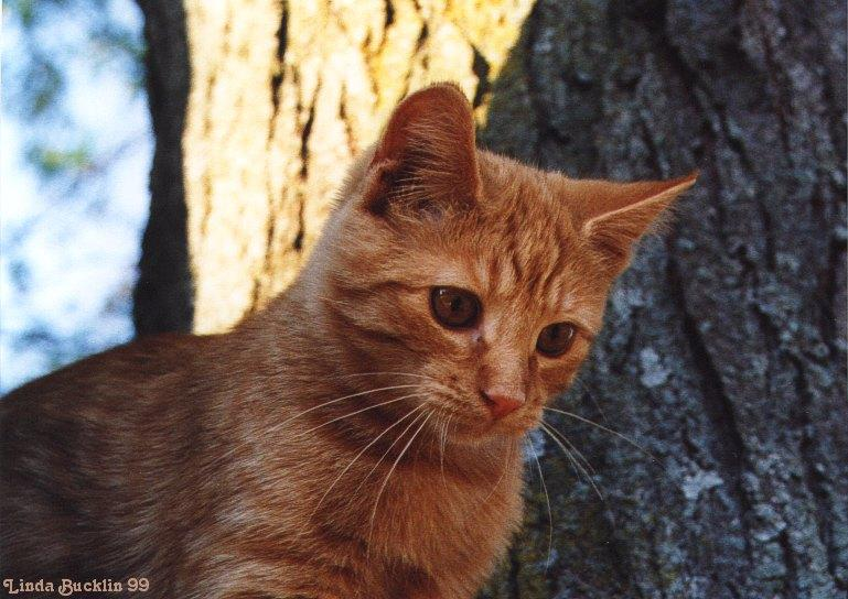 Cat in a tree; Image ONLY