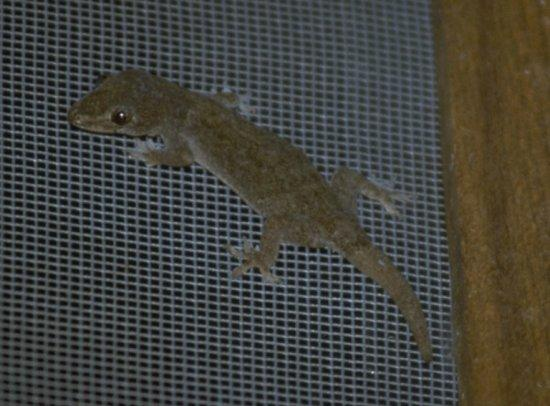 Re: Any lizardy things - small gecko.jpg; Image ONLY