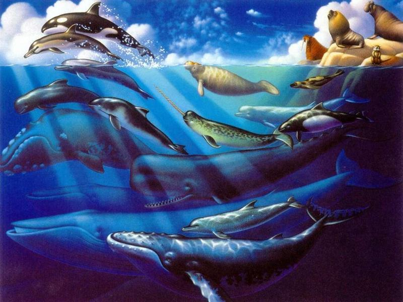 dolfijn art-Dolphins Whales and Seals-by Dineke Jansen.jpg