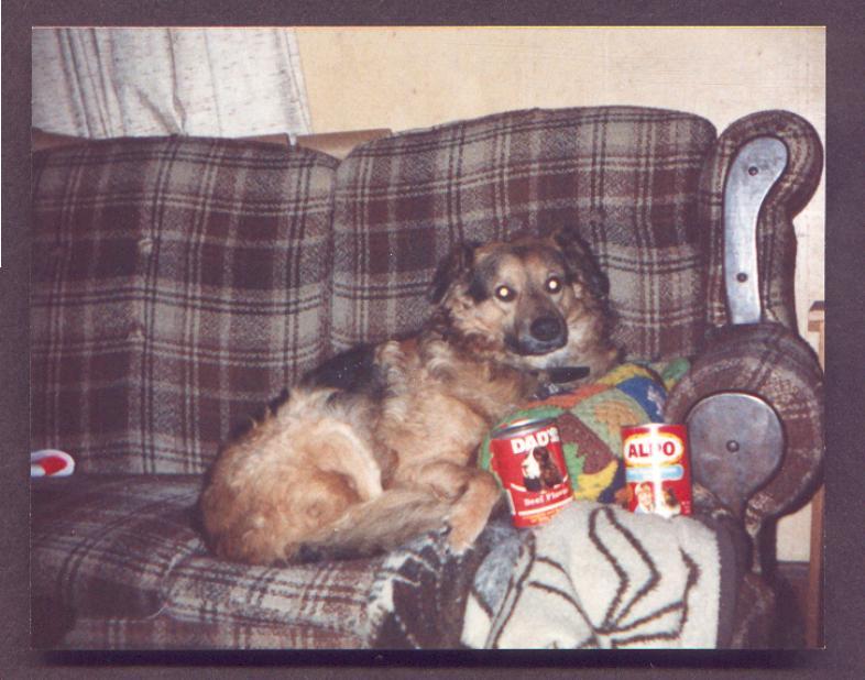 wlhj per toy a-Dog-by William L. Harris Jr.jpg