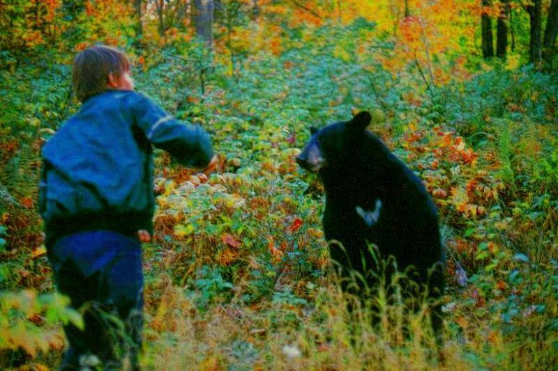 American Black Bear Being Fed_01; Image ONLY