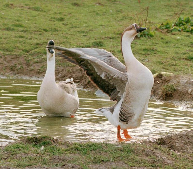 Testing my new camera + new film - colorful geese in Kruezen Animal park; DISPLAY FULL IMAGE.