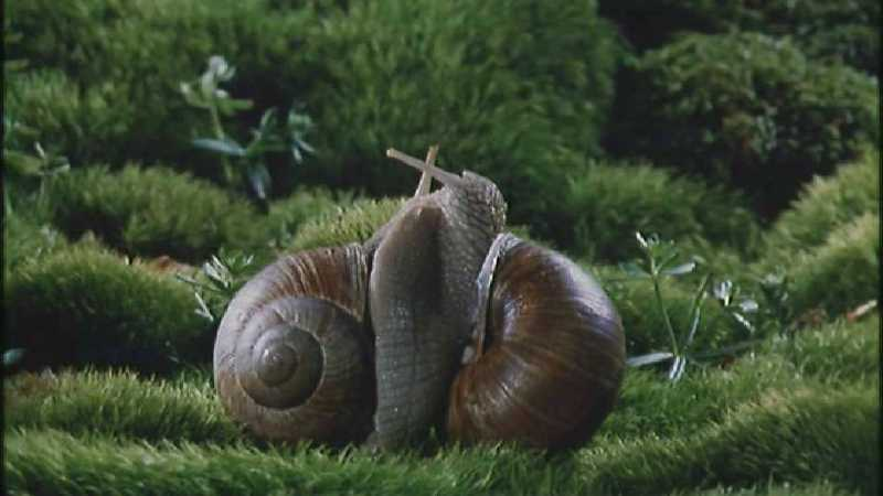 D:\Microcosmos\Garden Snails] [01/20] - 112.jpg (1/1) (Video Capture); DISPLAY FULL IMAGE.
