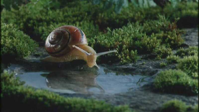 D:\Microcosmos\Garden Snails] [17/20] - 256.jpg (1/1) (Video Capture); DISPLAY FULL IMAGE.