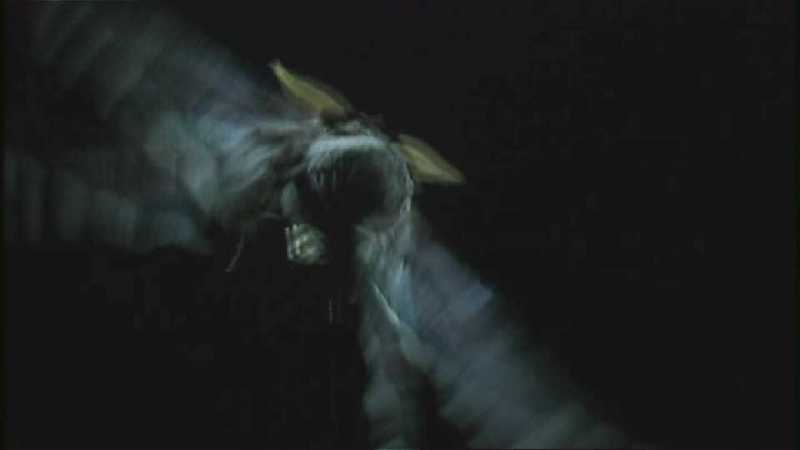 D:\Microcosmos\Moth's Flight] [01/13] - 292.jpg (1/1) (Video Capture); DISPLAY FULL IMAGE.