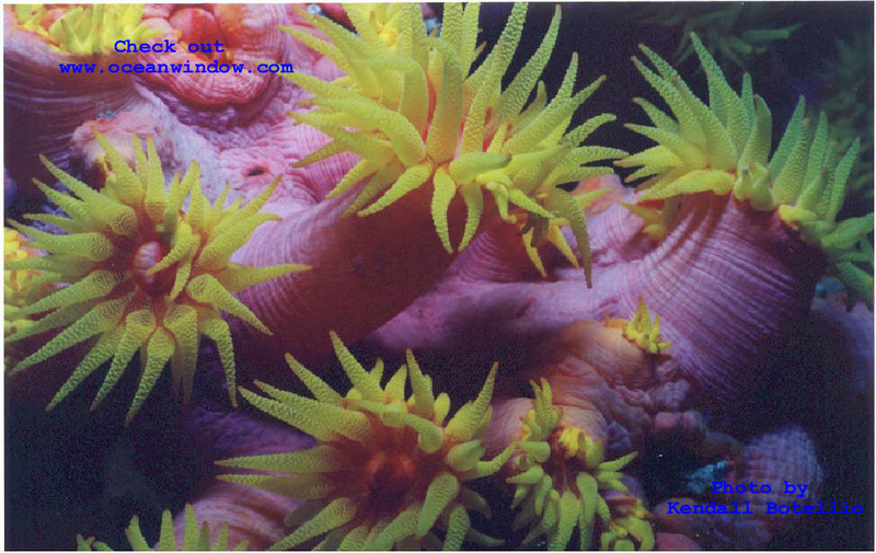A killler shot of the soft corals of the Phillipines; DISPLAY FULL IMAGE.