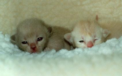 More very young kitties ;-); Image ONLY