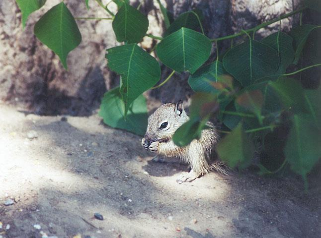 June 02 squirrel; Image ONLY