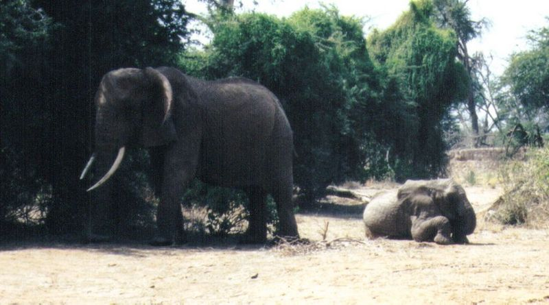 Dn-a0259-African Elephants-by Darren New.jpg