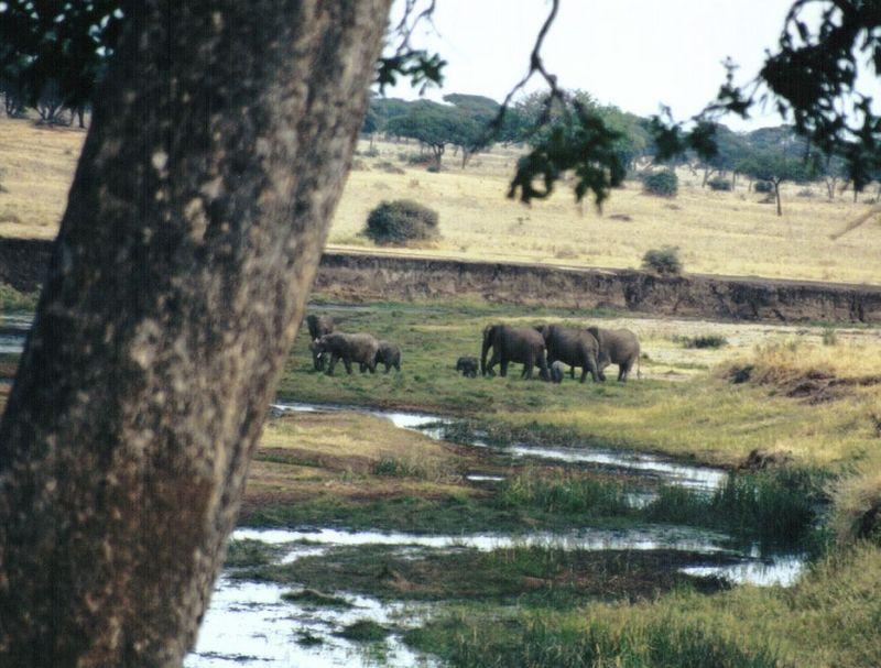Dn-a0325-African Elephants-by Darren New.jpg