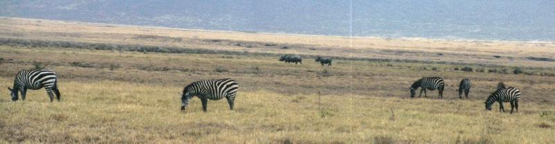 (P:\Africa\Zebra-Plains) Dn-a0960.jpg (1/1) (49 K); DISPLAY FULL IMAGE.