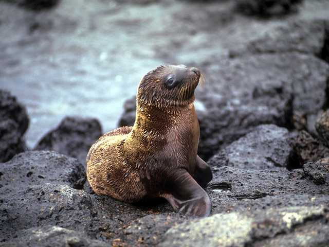Galapagos - Sea Lions (5 images) 3; Image ONLY