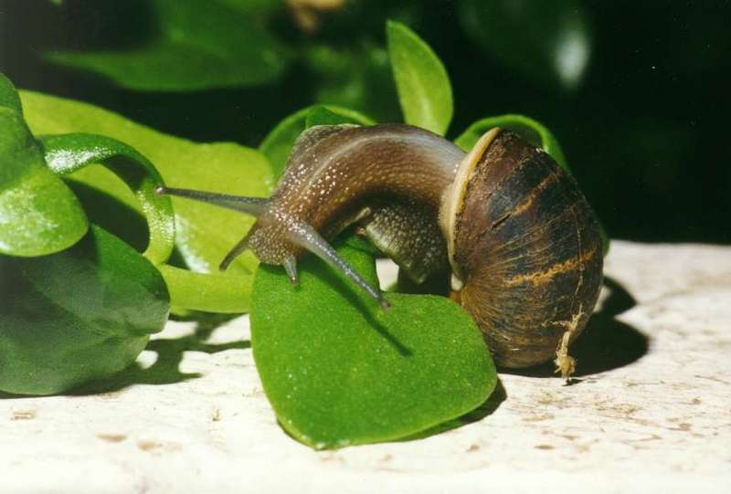 Re: Search Snails; DISPLAY FULL IMAGE.
