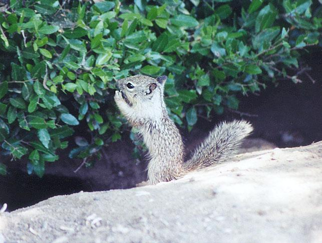 June 16 squirrel; Image ONLY