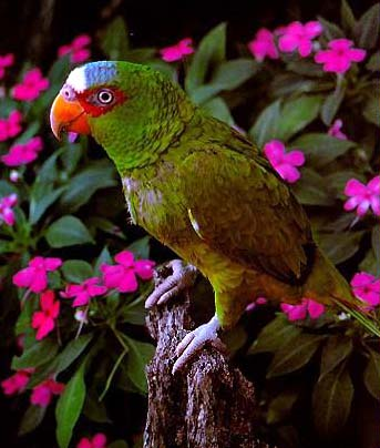 Re: I am looking for parrots..; Image ONLY