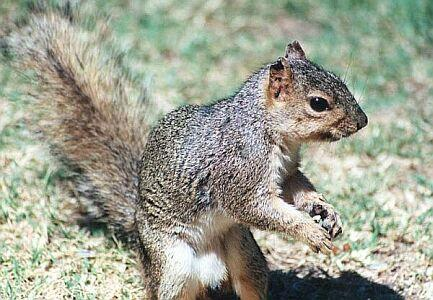 300 squirrels; Image ONLY
