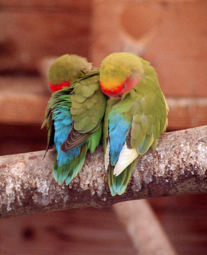 Kruezen Animal Park again - Sweet couple o'birdies - but what are they?; Image ONLY