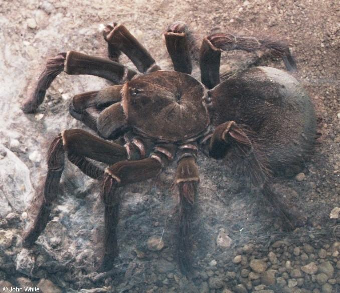 Re: Please post big hairy spider pictures; Image ONLY